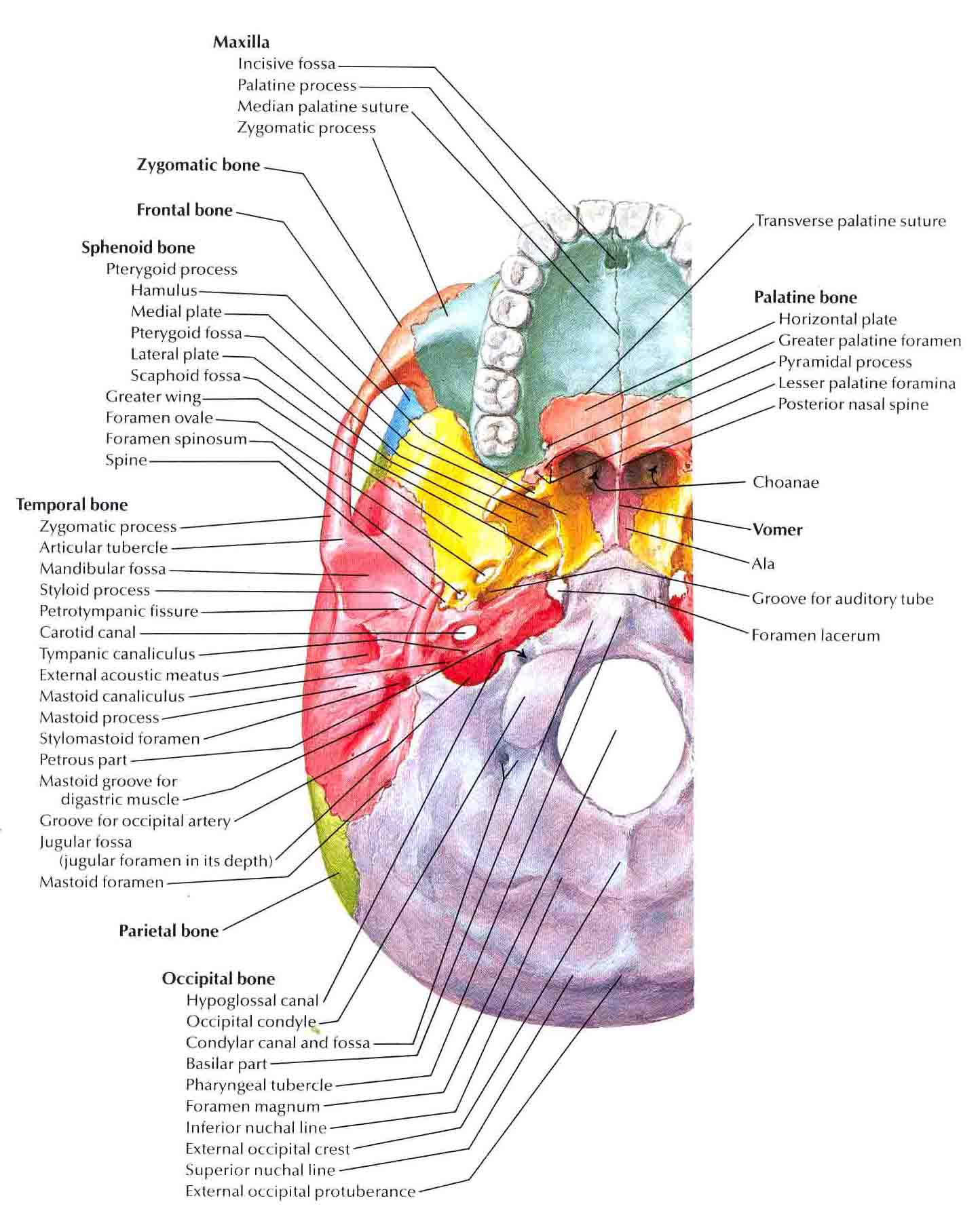 Anatomi patologi organ bedahunmuh 39 s blog for Schema fossa imhoff dwg