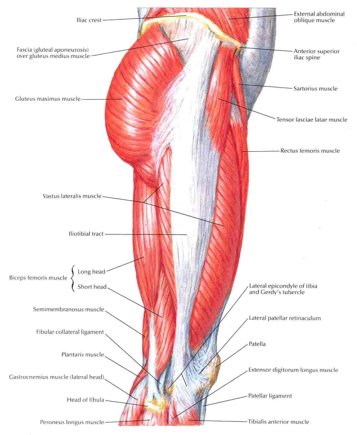 Crossfit Games Results 2009 Lateral Muscles Of The Hip Bpi Sports