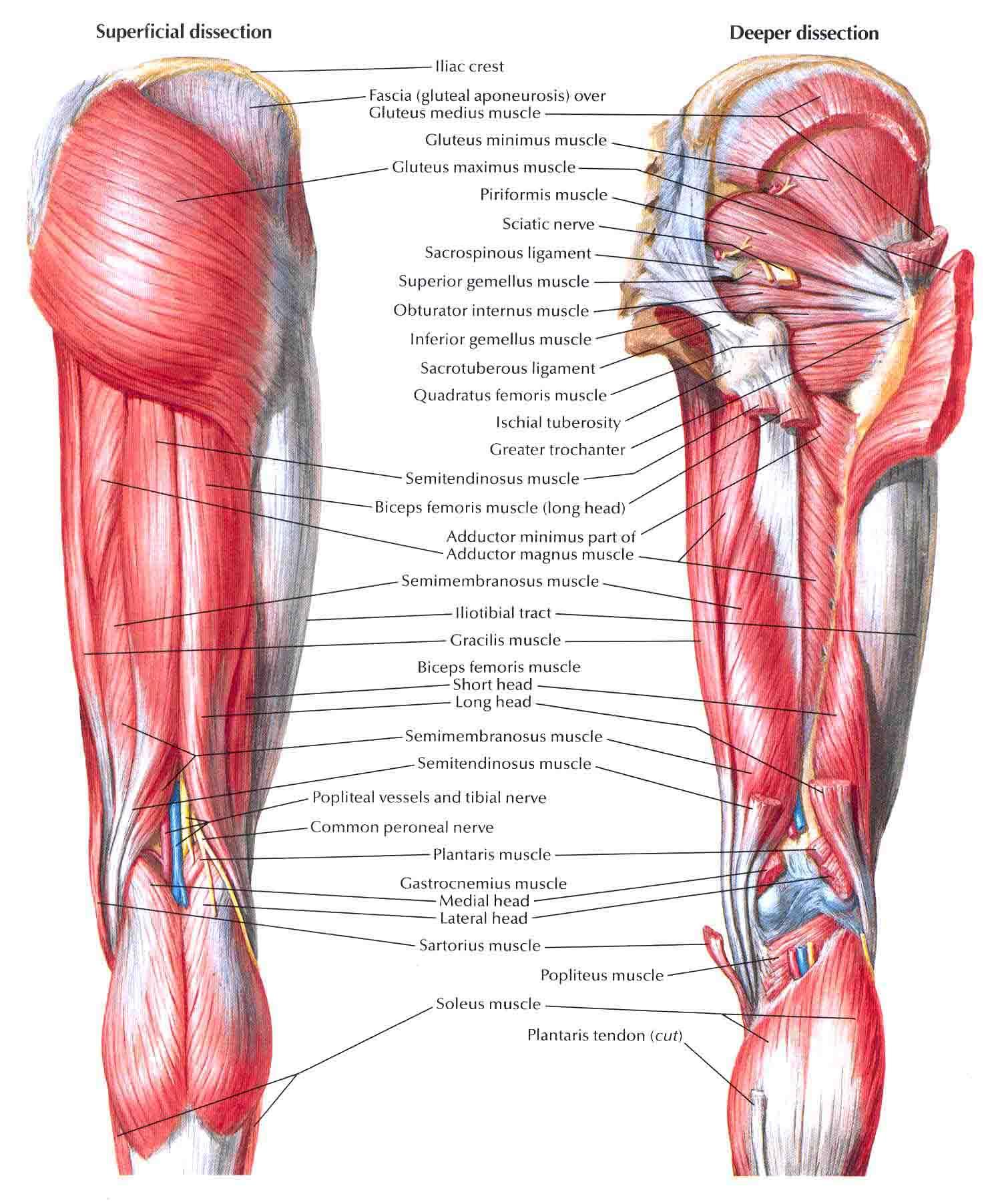 Diagnosis: Diagnosis Code For Hip Pain  Posterior