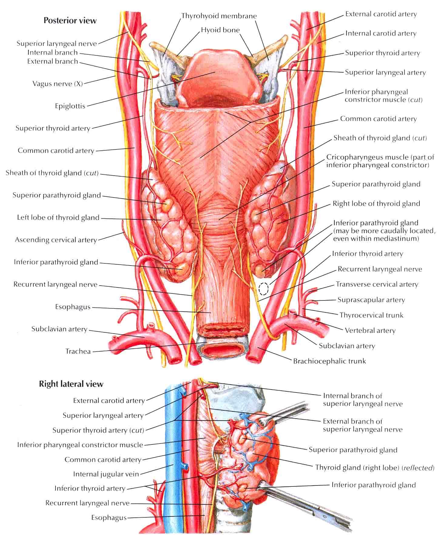 passing multiple gallstones
