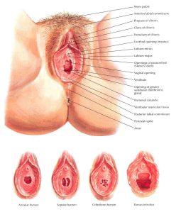 Mistake female erogenous zones diagram