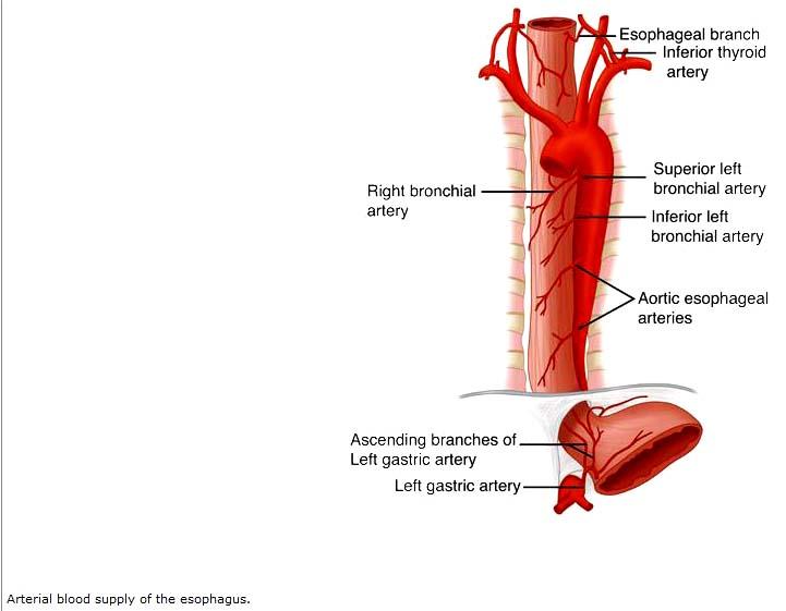 Arterial Blood http   ...